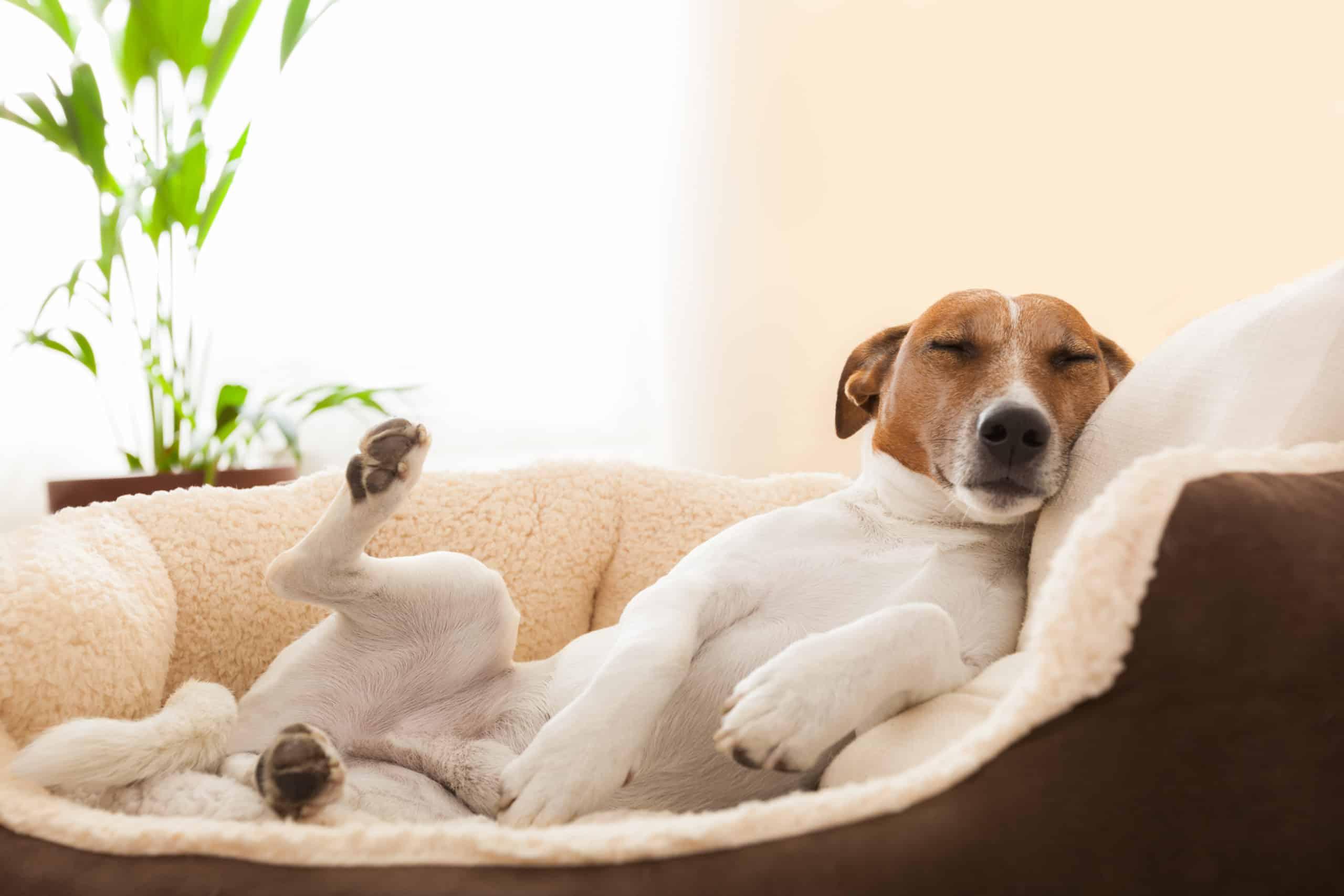 Krankenversicherung für Hunde und Katzen